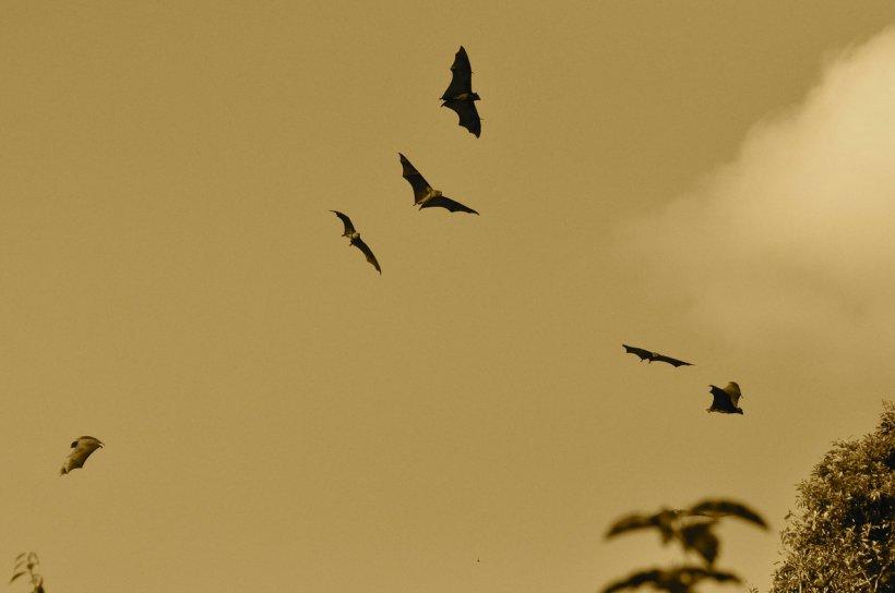 """Locul în care sute de lilieci au fost ucişi după ce creierul lor """"a fost prăjit"""". Au început să se prăbuşească în zbor"""