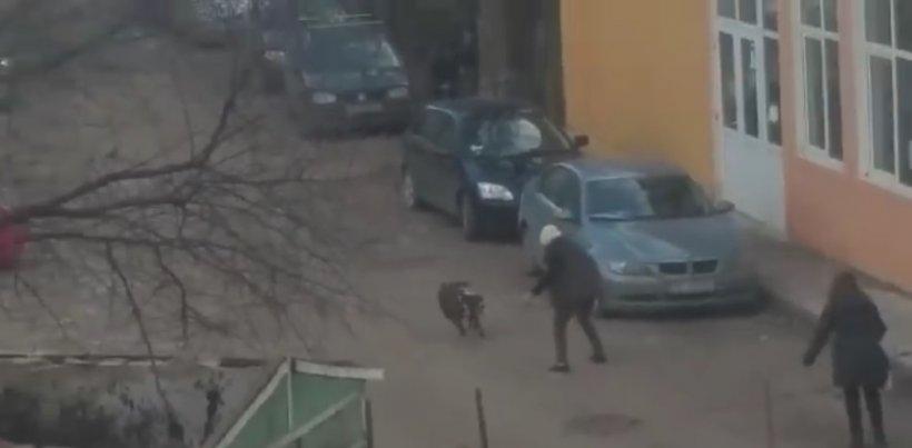 Incident cumplit la Iași. Doi câini au atacat un bărbat pe stradă și l-au castrat. S-a întocmit dosar penal pe numele proprietarei câinilor VIDEO