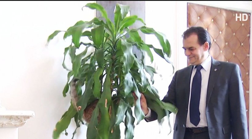 Politikix. Președintele PNL, imagini de senzație. Ce metodă antistres a găsit Ludovic Orban