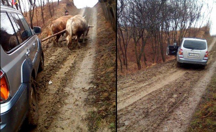 Imagini inedite în România! Jepp cu doi boi putere - VIDEO