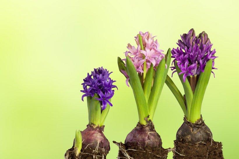 Ce trebuie să faci ca să nu îți mai ofilească plantele. Ai nevoie de trei ingrediente banale