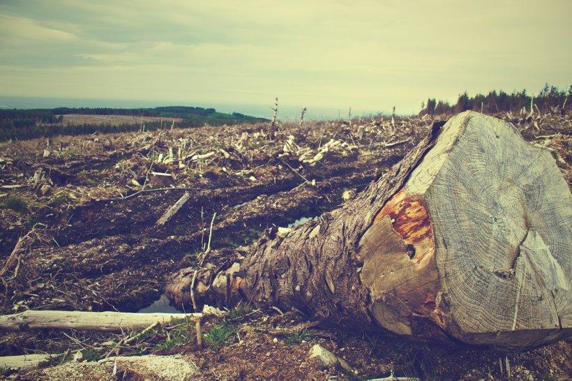 Liber la defrișări. Senatorii au adoptat un proiect care permite defrișarea pădurilor virgine