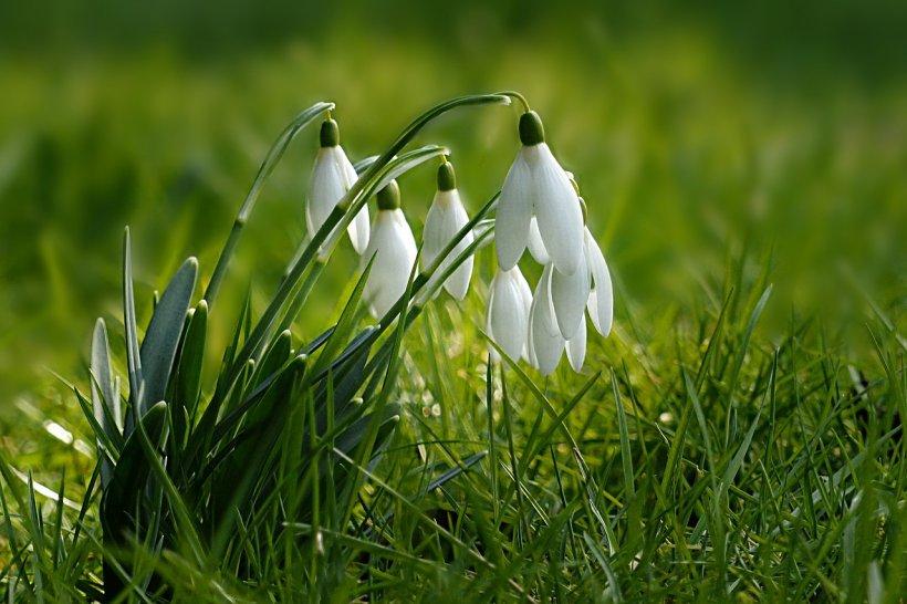 Prognoza meteo din bătrâni pentru luna martie