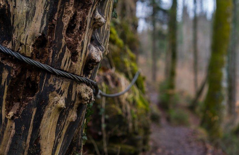 Descoperire incredibilă într-o pădure din Sibiu. Polițiștii au rămas șocați când au văzut ce era îngropat acolo