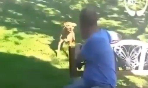 Revedere spectaculoasă între un cățel și stăpânul său. Incredibil cum a reacționat patrupedul în primele momente (VIDEO)