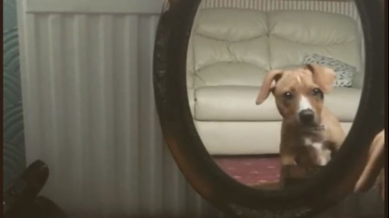 Imagini haioase. Reacția unui cățel care s-a văzut pentru prima dată în oglindă (VIDEO)