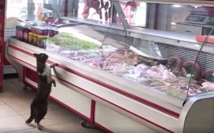 În fiecare zi, o pisică intră în acest magazin și se așează cuminte în fața vitrinei. Este incredibil ce urmează - VIDEO