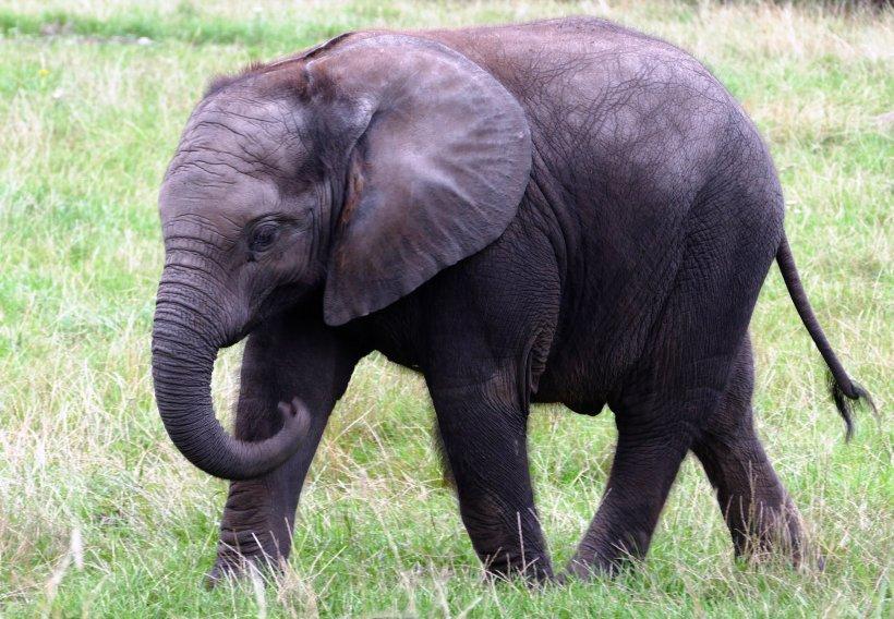 O britanică a fost ucisă de un elefant. Partenerul său a descris experiența terifiantă prin care au trecut