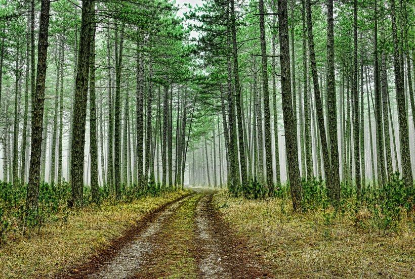Moarte suspectă în Dâmboviţa. Un bărbat a fost găsit fără viaţă, în pădure