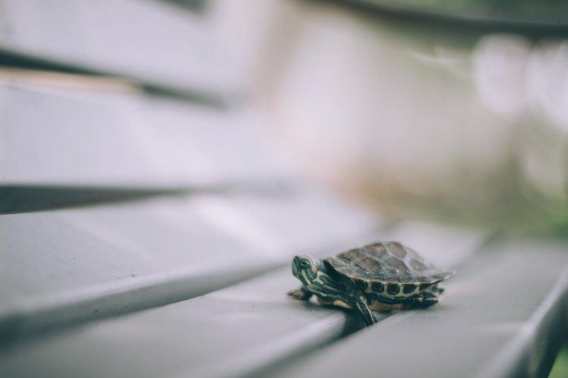 Mii de țestoase, descoperite într-o casă. Incredibil ce avea de gând proprietarul să facă cu ele