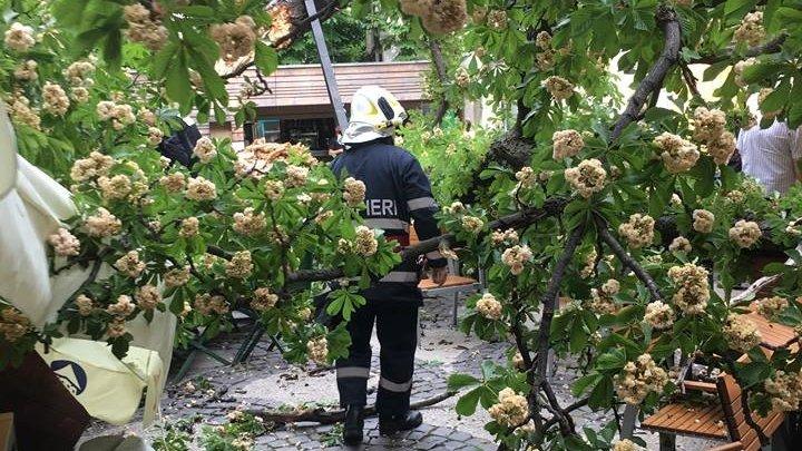 Incident în Capitală. Un copac s-a rupt și a căzut pe terasa unei cafenele