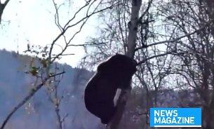 Scene de coșmar. Doi tineri turiști s-au întâlnit cu ursul în pădure. Au stat ore întregi într-un brad de frica lui