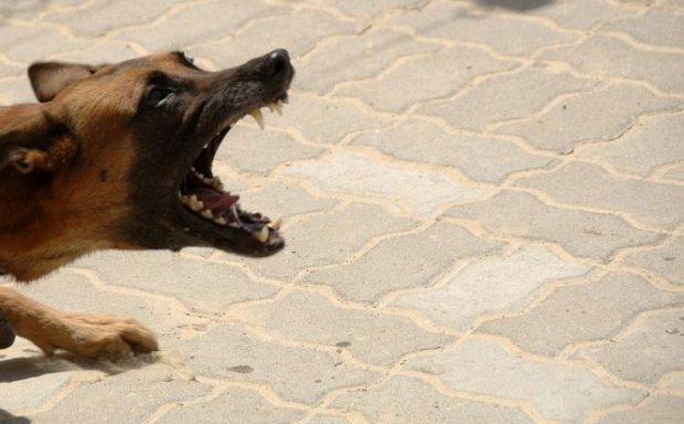 Clipe de groază pentru un băiețel din Arad. A fost mușcat de un câine lăsat liber de stăpân. Copilul e în stare gravă la spital