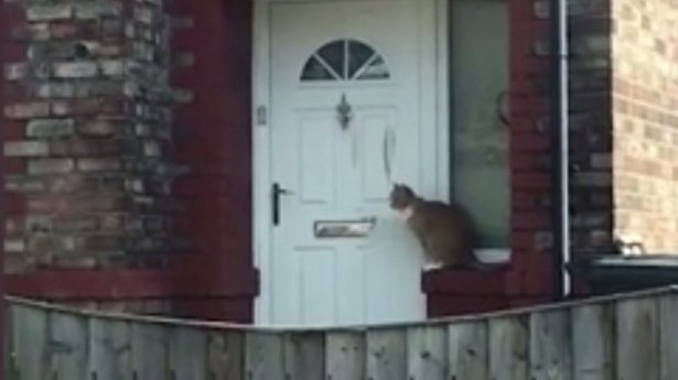 A văzut o pisică apropiindu-se de ușă și… Nu i-a venit să creadă ce vede, așa că a scos telefonul și a înregistrat totul (VIDEO)