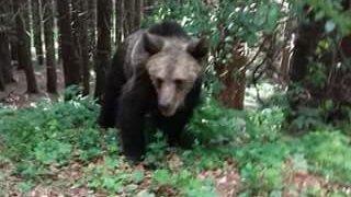 Era la lacul Sfânta Ana și a vrut să facă un selfie cu un urs. Ce a pățit femeia e de necrezut