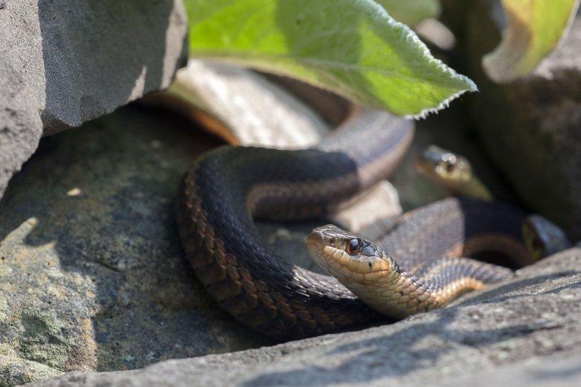Momente de panică pentru mai mulți părinți din județul Dolj. Doi șerpi au fost filmați într-un loc de joacă