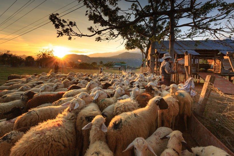 A snopit în bătaie un bătrân pentru că a lăsat oile pe terenul său . Ce a pățit bărbatul