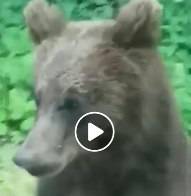 S-au trezit cu ursul în dreptul lor, pe Transfăgărășan. Ce a urmat e incredibil - VIDEO