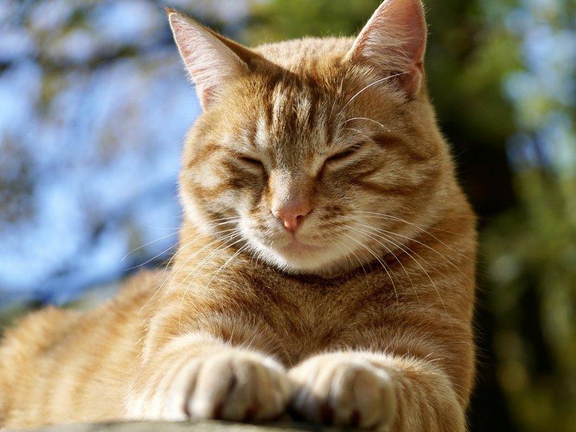 Și-a pierdut pisica în 2008. Ce a aflat acum bărbatul din Marea Britanie