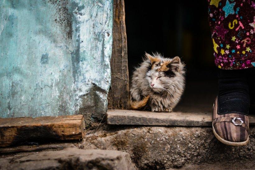 Raport al Băncii Mondiale: 900.000 de români trăiesc în condiţii de sărăcie extremă