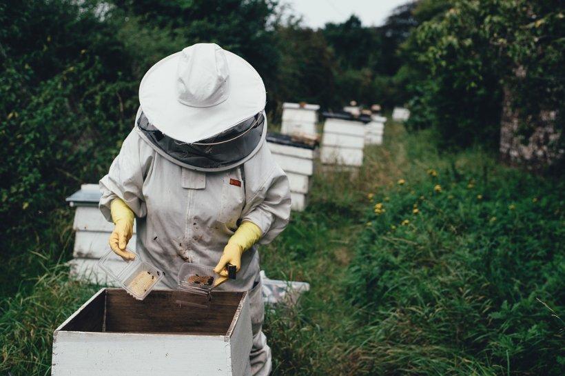 Tragedie în Italia! Un bărbat a fost ucis la o fermă de albine