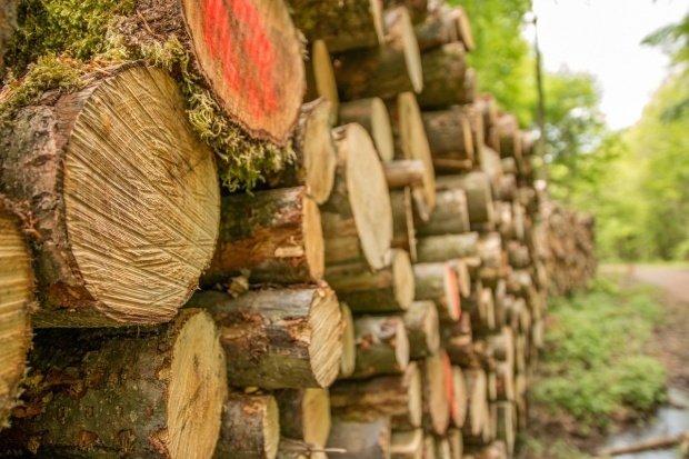 Un ONG american acuză Schweighofer că folosește în continuare lemn din parcurile naționale ale României