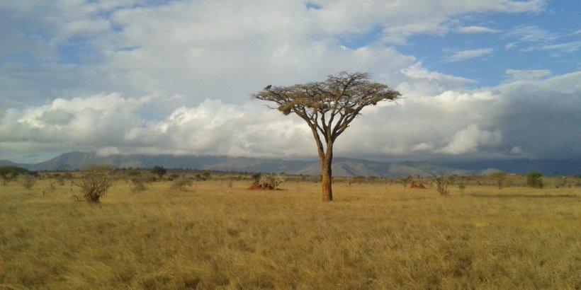 O călătoare singură prin Kenya