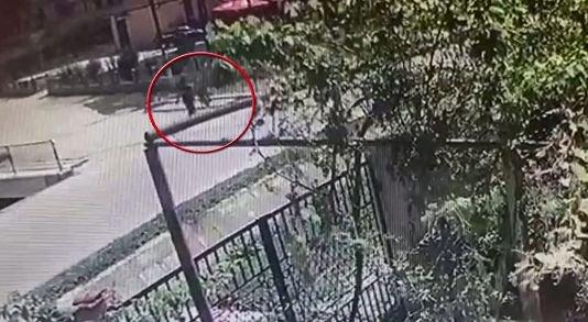 Incident mai puțin obișnuit în Constanța. Un bărbat a fost călcat în picioare de un cal