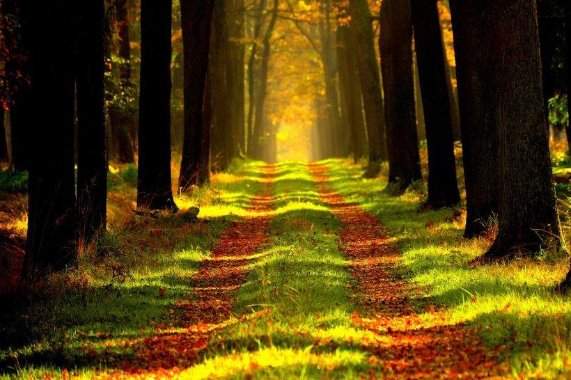 Copaci din pădurile României, de vânzare pe Facebook