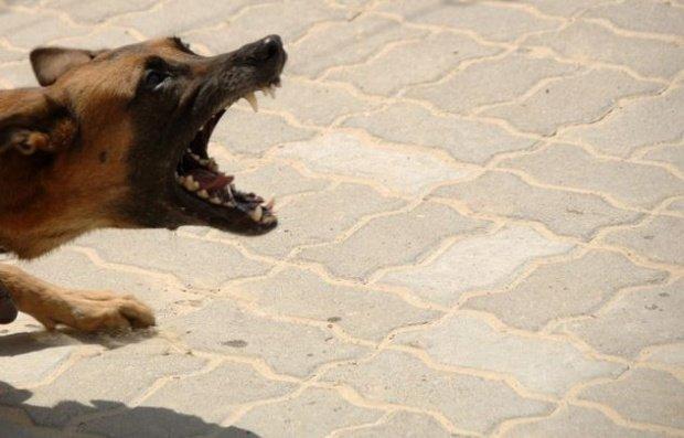 Caz șocant în Capitală. O femeie a fost sfâșiată de câine, sub privirile îngrozite ale trecătorilor