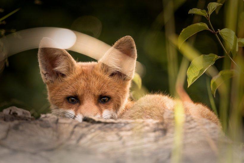 Era în grădină când a auzit un zgomot. La scurt timp, o vulpe turbată a ieșit dintr-un tufiș și i-a sărit pe picior. Gestul disperat făcut de femeie