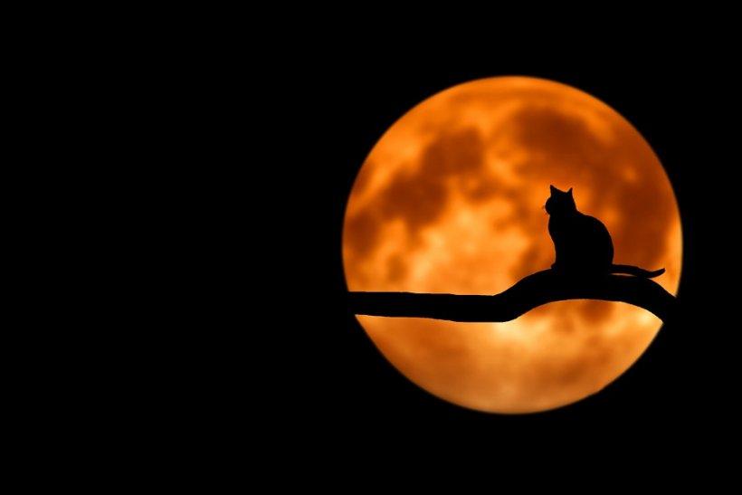 Eclipsa totală de Lună din 27 iulie. La ce ore va răsări Luna în cele mai mari oraşe din România (FOTO)