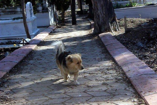 În fiecare zi, câinele pleca de acasă pentru câteva ore. Într-o zi, s-a decis să-l urmărească. Când a văzut ce făcea, a izbucnit imediat în lacrimi (GALERIE FOTO) 16