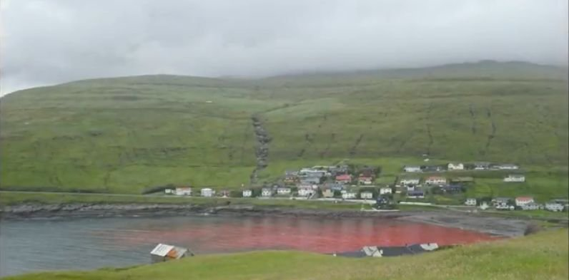 Imagini șocante! Marea a devenit roșie de la sânge - Localnicii au rămas muți când au văzut ce murise în apă