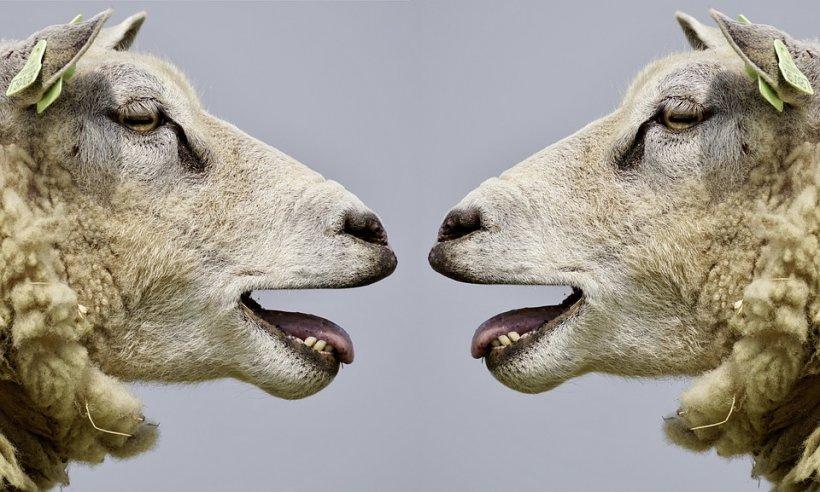 """Puțini români știu asta! De unde provine, de fapt, celebra expresie """"Să revenim la oile noastre"""""""