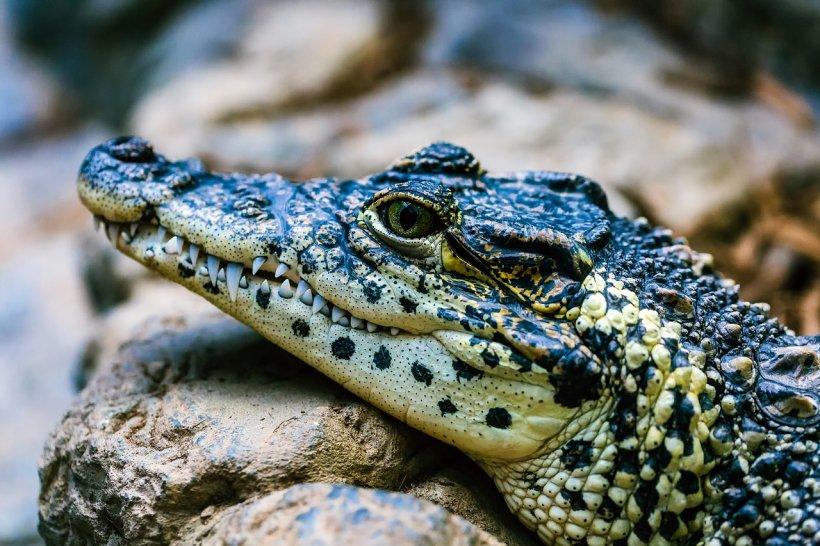 Și-a pierdut viața în timp ce încerca să-și salveze câinele de un aligator