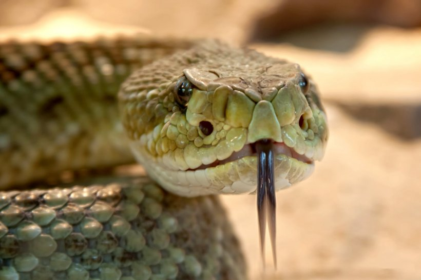 Un anaconda uriaș, de aproape trei metri, prins de autorități în apropierea unui lac