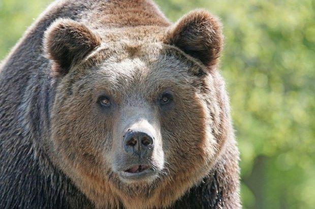 Un urs a fost lovit mortal de unTIR pe Autostrada Sibiu - Orăştie. Animalul, proiectat într-un alt autoturism