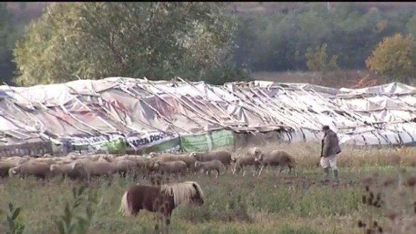 Imagini cu camera ascunsă! Fermele improvizate descoperite în Bucureşti, adevărate focare de infecţie - VIDEO