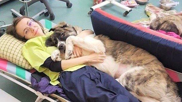 Imaginea care a cucerit internetul. Un cățel aflat la un pas de moarte, salvat de medicii veterinari