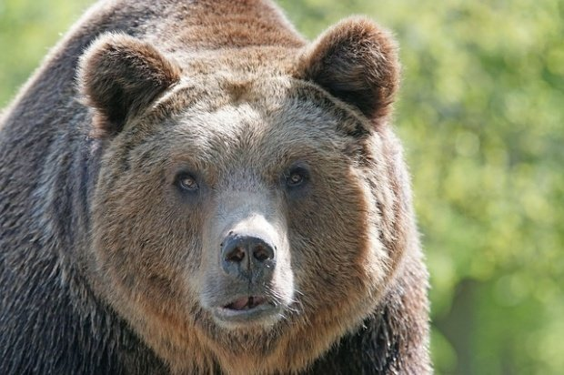 Urs omorât cu un topor după ce a atacat două persoane din Prahova