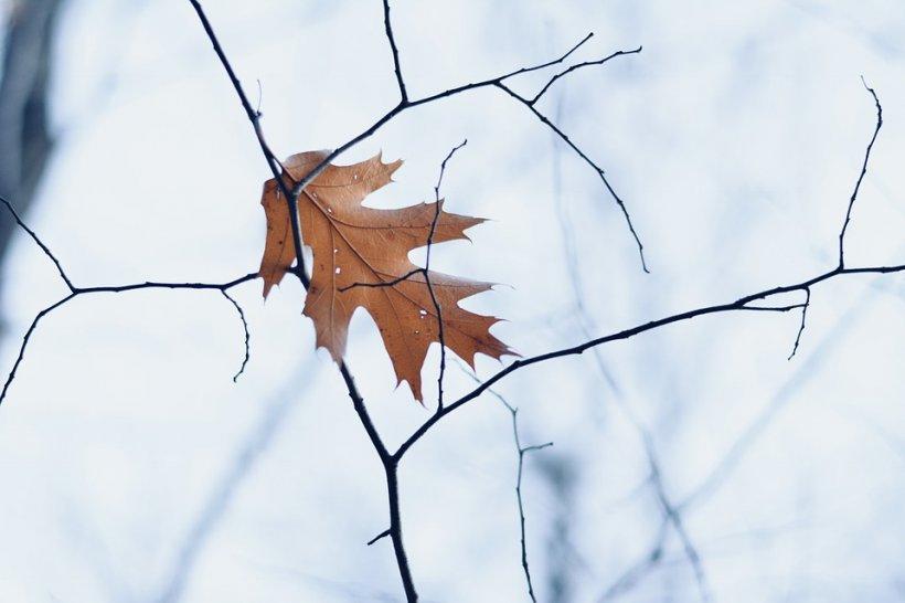 Meteorologii au actualizat prognoza. Temperaturile scad dramatic și cad primii fulgi