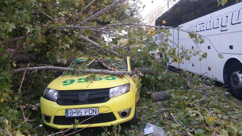 Accident grav în sectorul 5 al Capitalei. Un copac a căzut peste un om. Bărbatul e inconștient