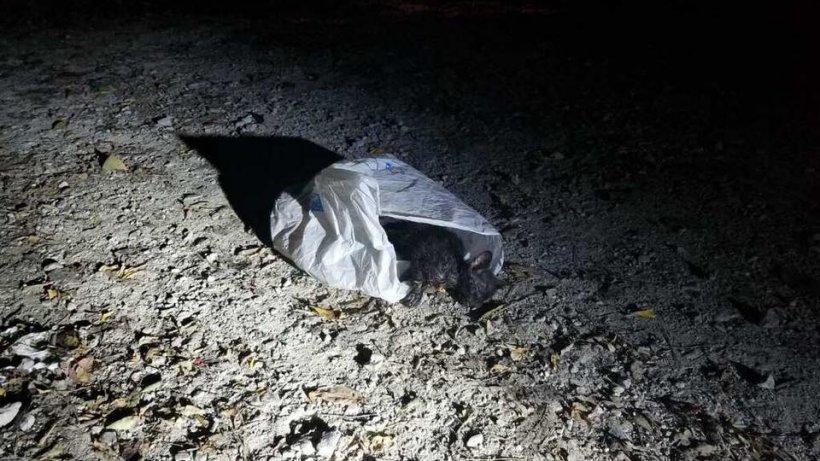 Un polițist a găsit o pungăde gunoi suspectăîntr-unparc! A înlemnit când a văzut ce se afla în interior - FOTO