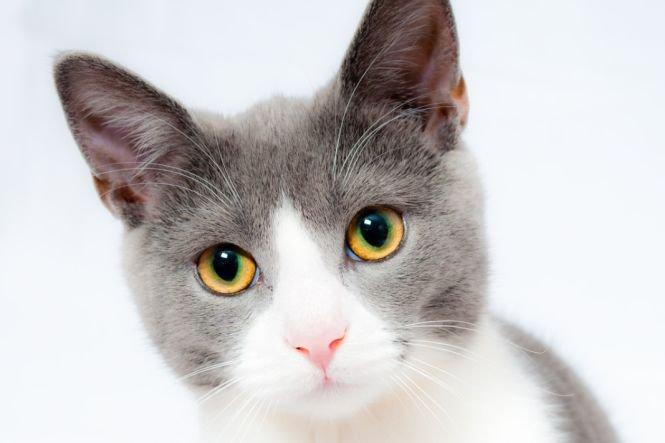 Bucureştenii care au pisici sau câini îi pot steriliza pe banii Primăriei, în 11 cabinete veterinare din Capitală