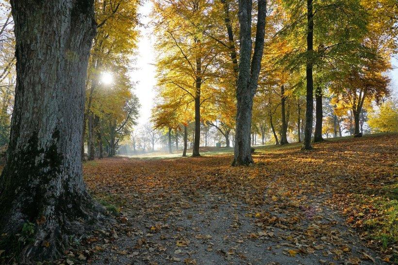 Vremea 29 octombrie. Prognoza meteo anunță încă o zi de vară