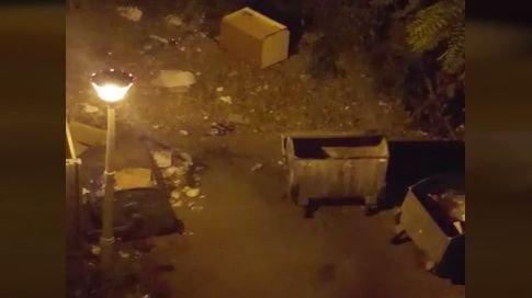 Situație revoltătoare în Craiova! O școală a fost invadată de șobolani