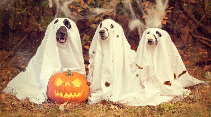 Tradiții, obiceiuri și superstiții de Halloween! Ce se întâmplă dacă vezi în această seară un păianjen în casă