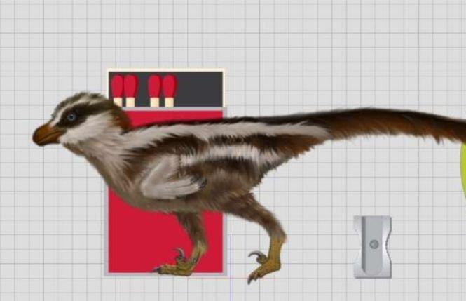 Adevărul despre cele mai mici urme de dinozaur din lume