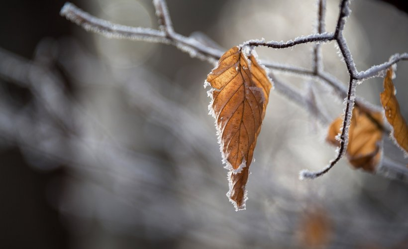 E cod galben de vreme rea! Vânt puternic, lapoviţă şi ninsoare în mai multe zone din țară